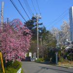 検見川神社の四季