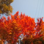 晩秋の検見川神社