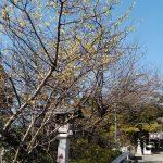黄鶯睍睆の候
